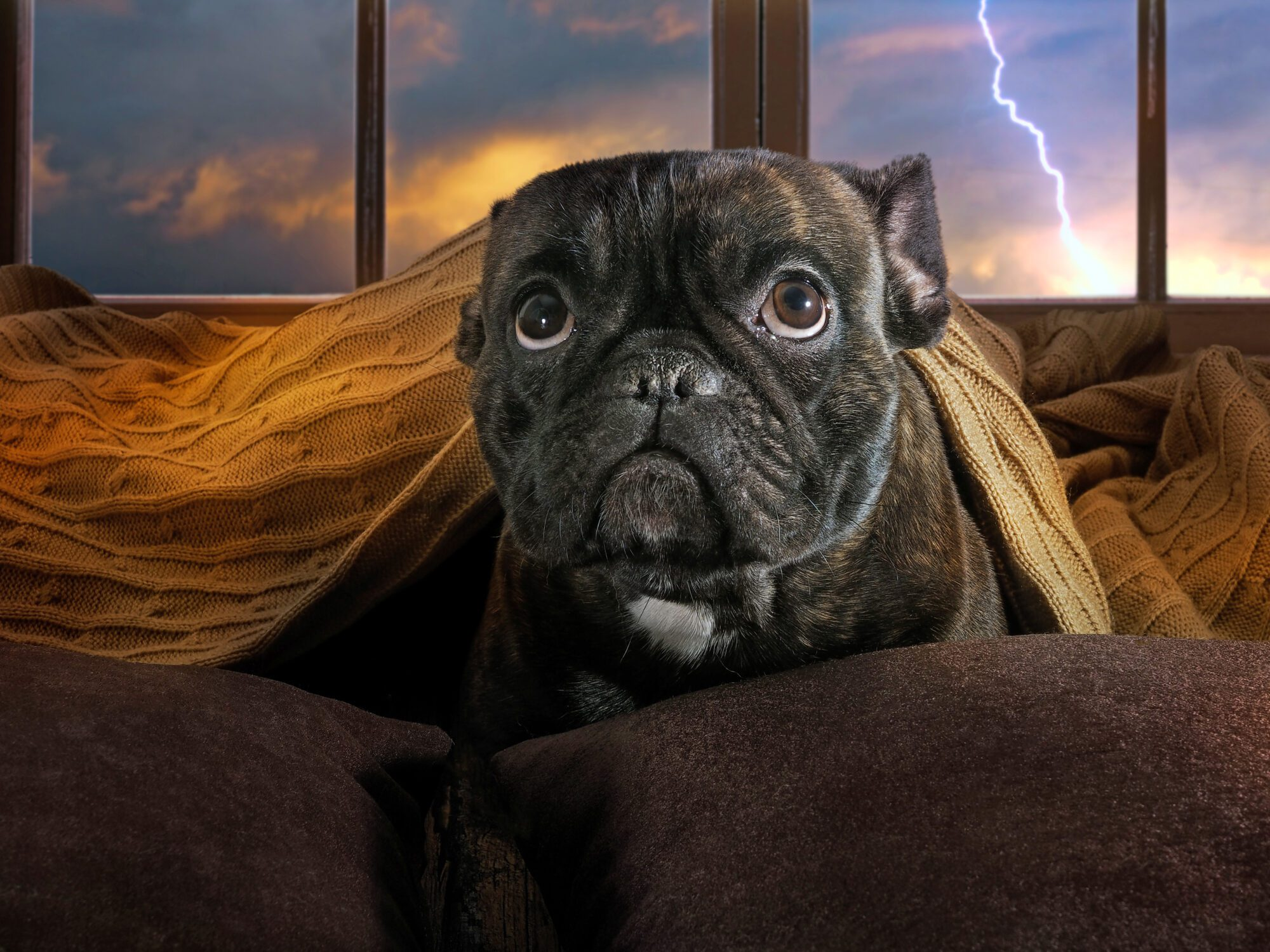 Dog afraid of thunderstorm