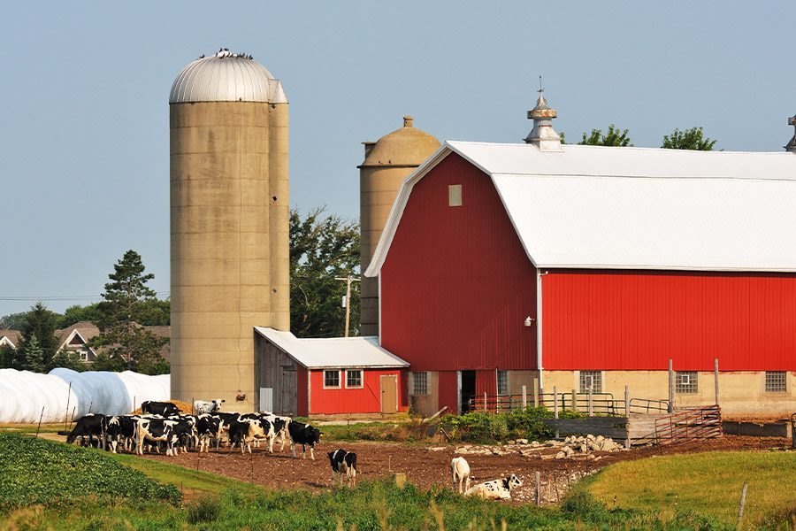 Farm Insurance - Picturesque View of a Dairy Farm on a Sunny Day
