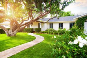 Beautiful white color single family home with big green grass yard, large tree and roses