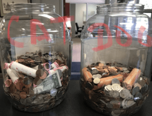 Penny War Cats and Dogs