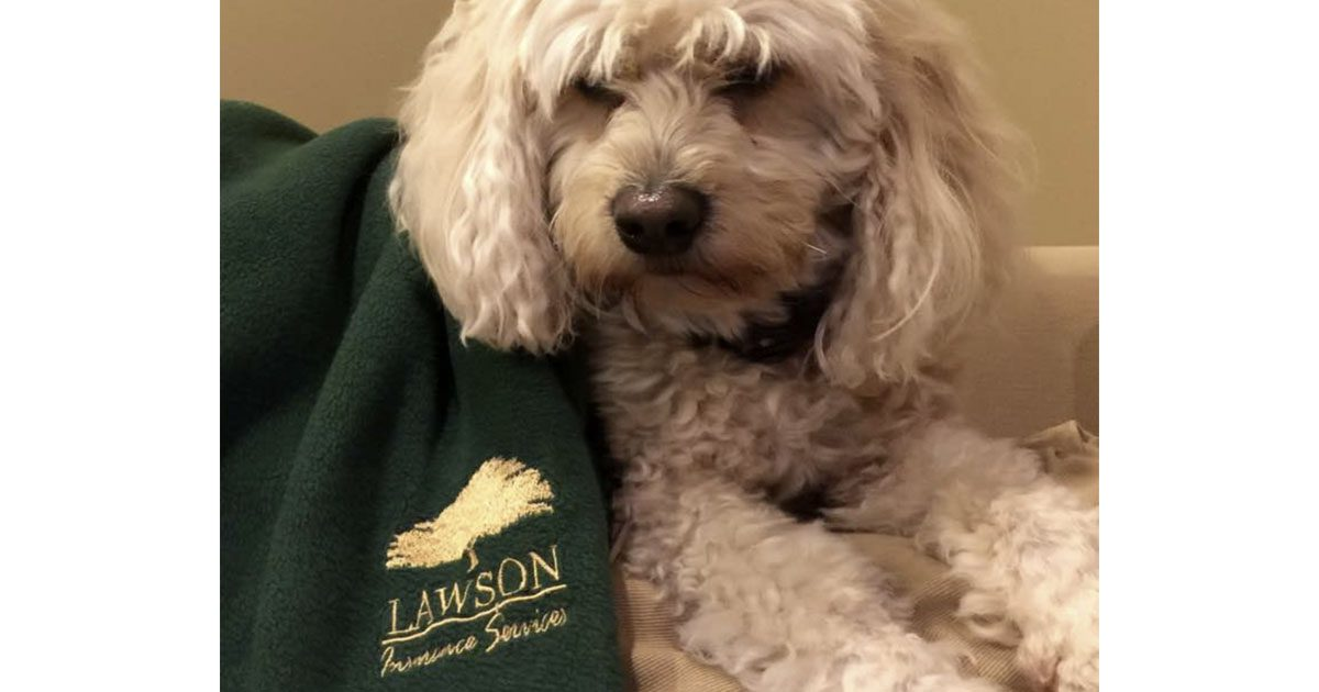 Dog with Logo Blanket