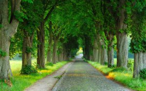 Road-with-Trees