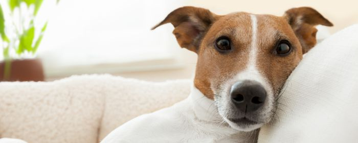 Homeowners insurance and dogs