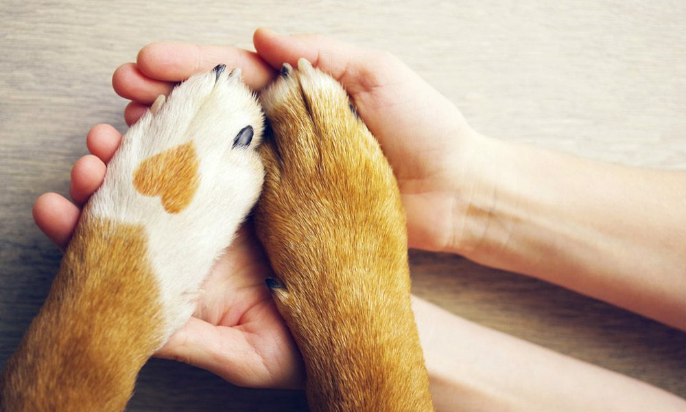 Blog - A Person's Hands Holding a Dog's Paws With a Heart Shape Pattern on Their Fur