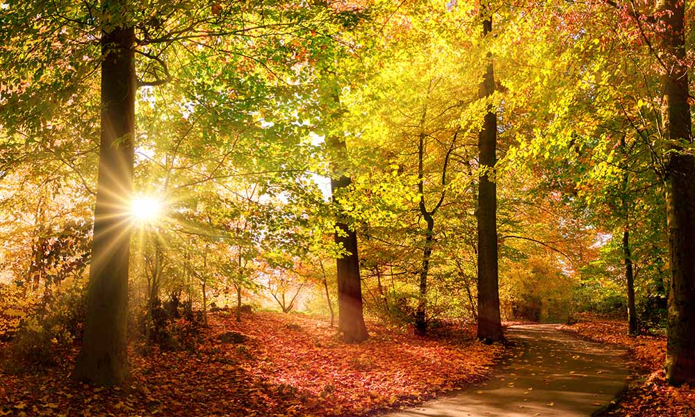 Blog - Everything You Need to Know about Leaf Peeping