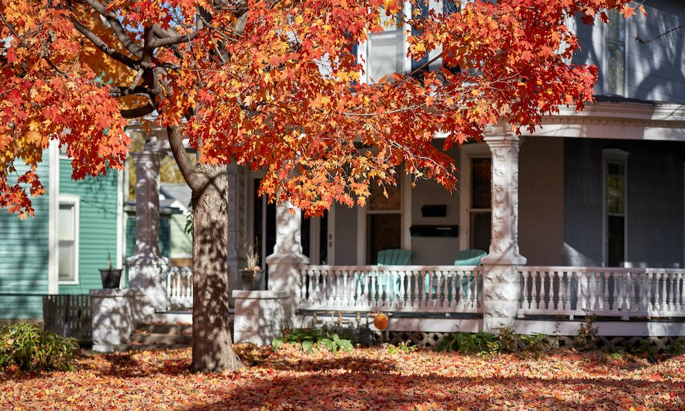 Fall Home Maintenance Tips - Colorful Red Tree in Autumn