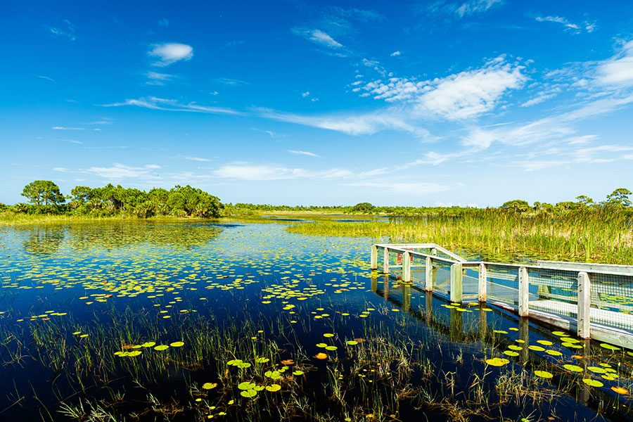 Contact - Lake with Green Lilly Pads with White Dock and Blue Sky