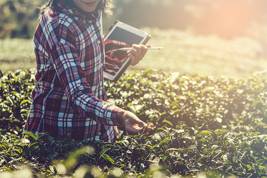 Specialized Business Insurance - Female Farmer with Ipad Reviewing Crop and Leaves
