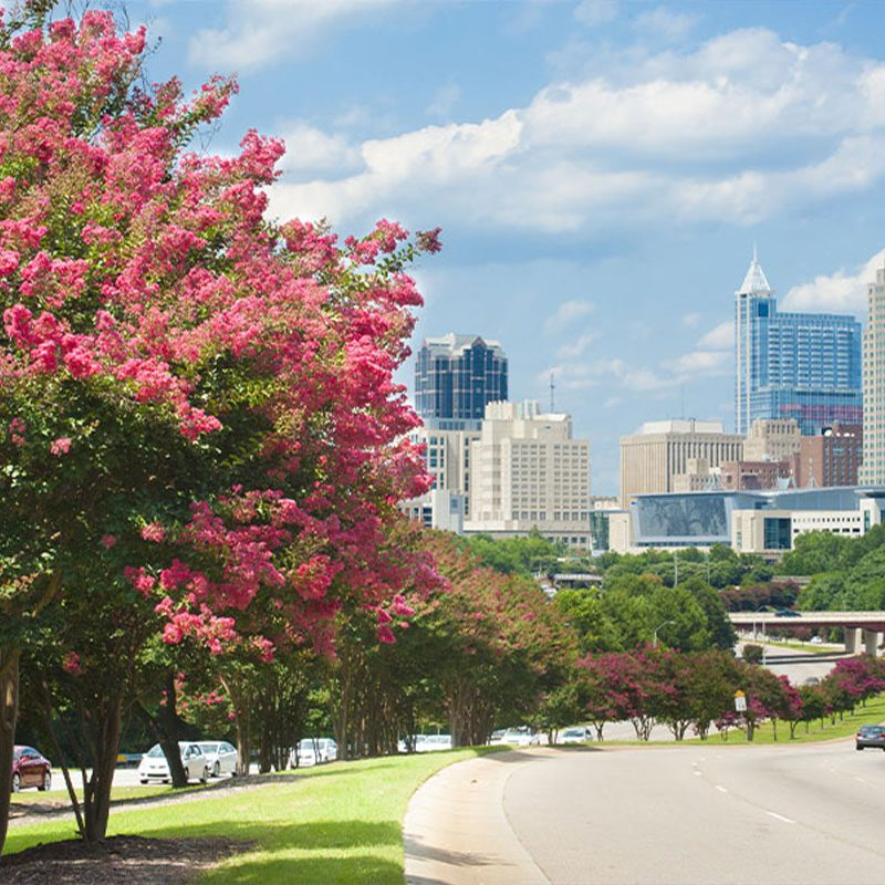 About Our Agency - Goldsboro, NC Insurance Goldsboro North Carolina Trees Bloom with Cityscape in the Distance Next to a Busy Road