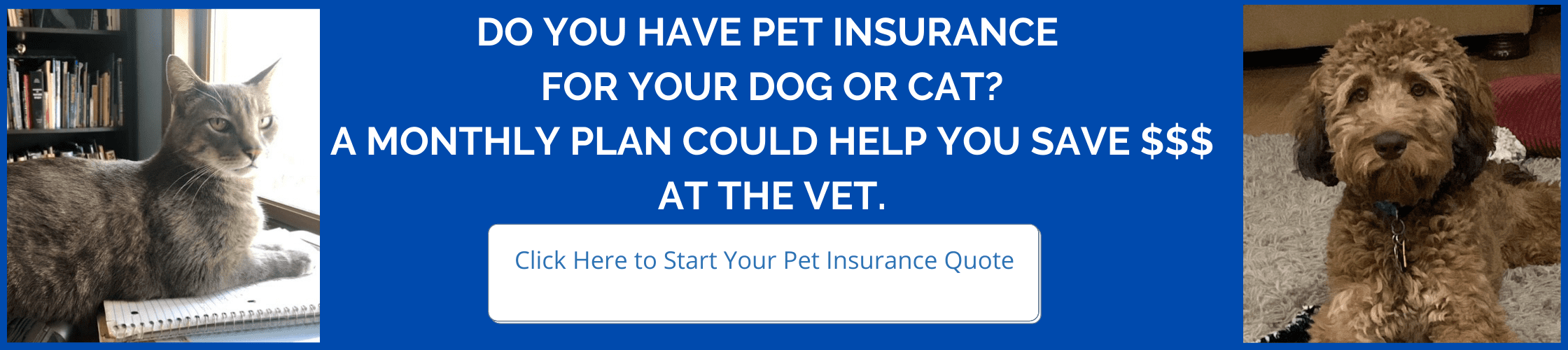 Get a pet insurance quote!