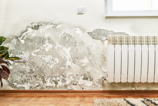 Mold-in-Home