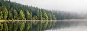 Header-Trees-with-Lake
