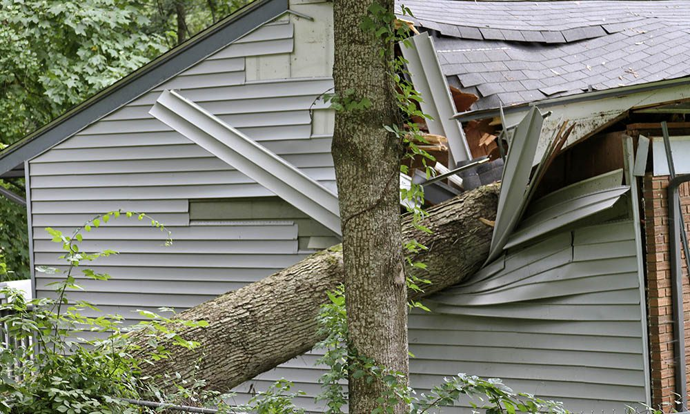 Blog - What value is your home insurance for? Is that amount correct? - Tree Fallen On A House
