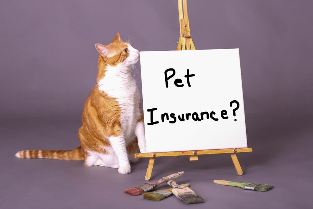Introduction To Pet Insurance