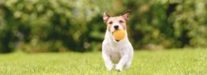Header - Pet Insurance - Family Dog Running With Play Ball