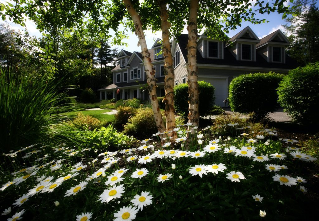 spring front yard with house