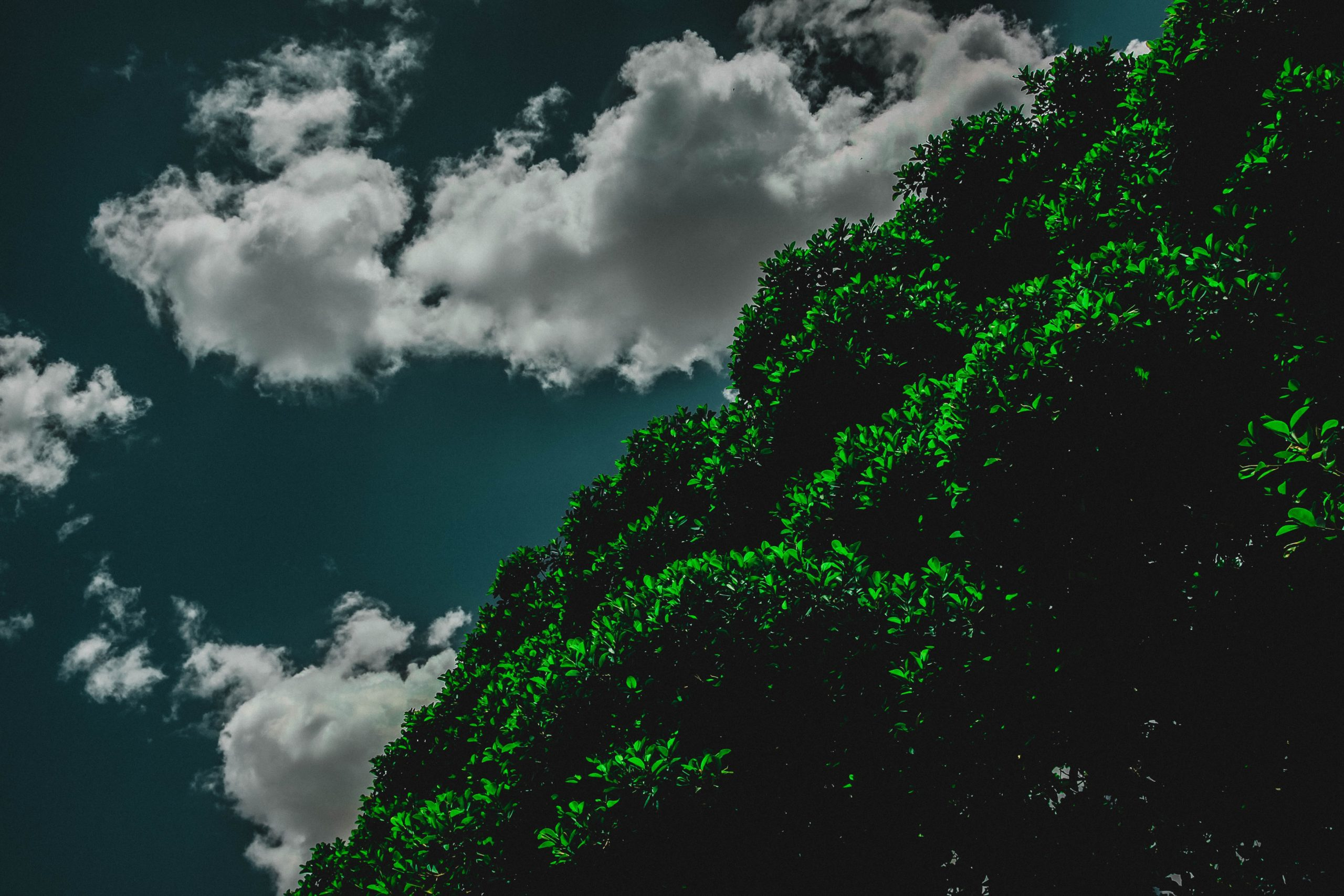 clouds with trees in the background