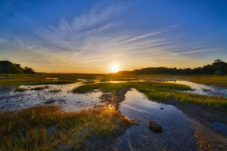 South Carolina Insurance - View of the Sunrise off a Swamp in the Summertime