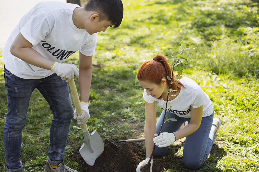 Specialized Business Insurance - Two People Planting a Tree in a Park For Non Profit and Volunteer Organization