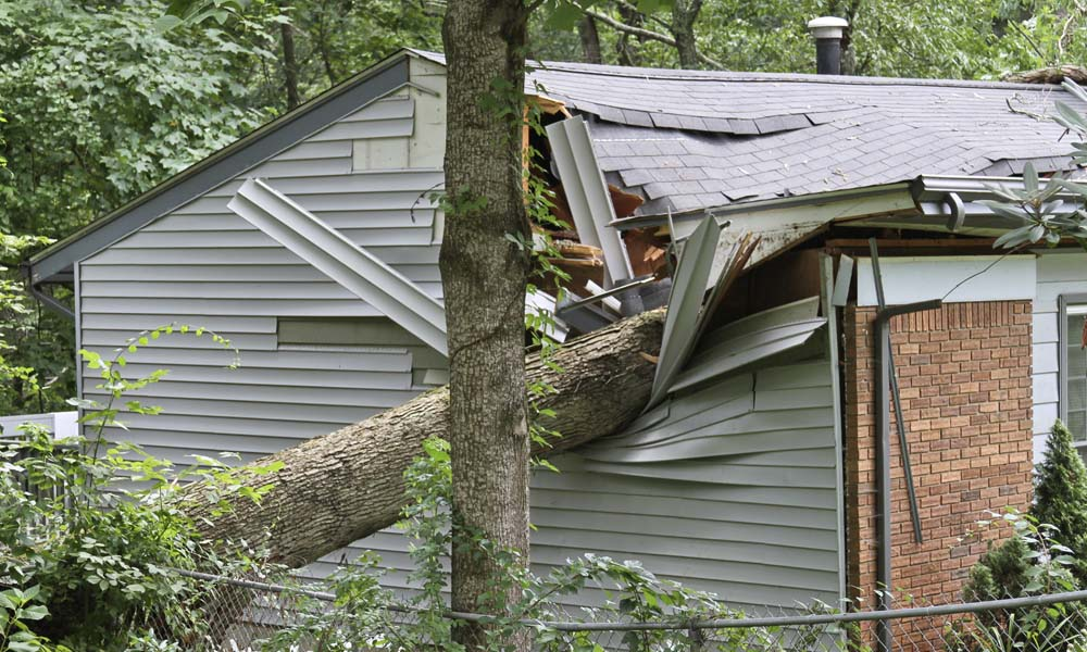 Blog - Does Insurance Cover Fallen Trees or Tree Limbs? 5 Things to Know