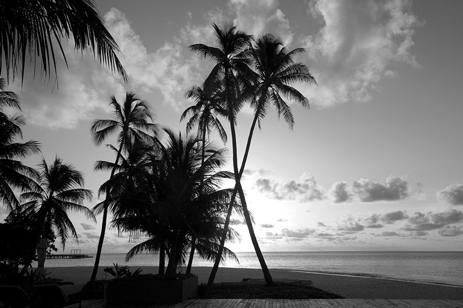 Ormond Beach, FL - View of Ocean and Palm Trees in Florida in Black and White
