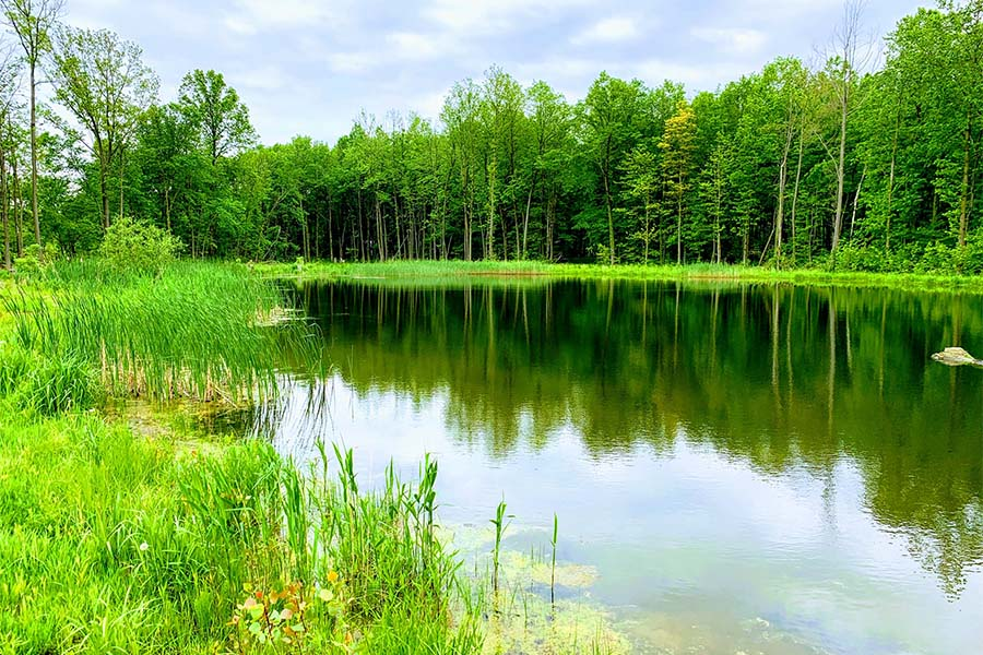 Blog - View Of Small Lake In Portage Indiana On Summer Day