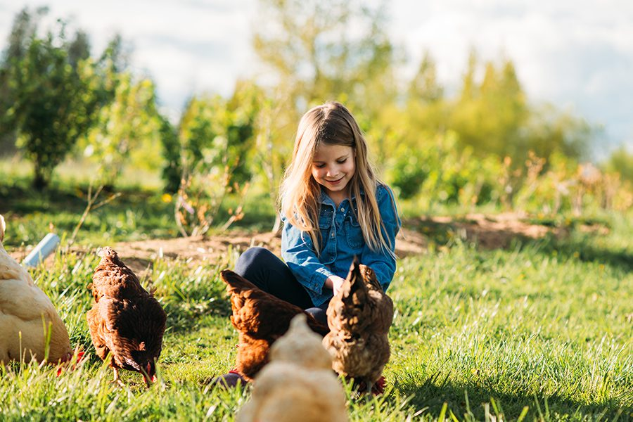 Specialized Business Insurance - A Happy Young Girl Feeding Hens at her Family Farm on a Bright Sunny Morning