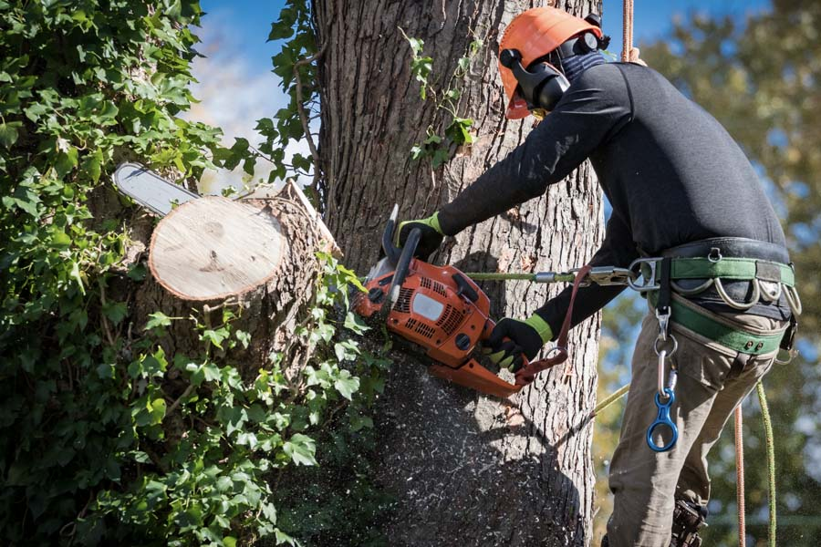 Contractor Tree Removal Services - Man in a Safety Harness and Helmet Cutting Sections of a Fallen Tree with a Chainsaw