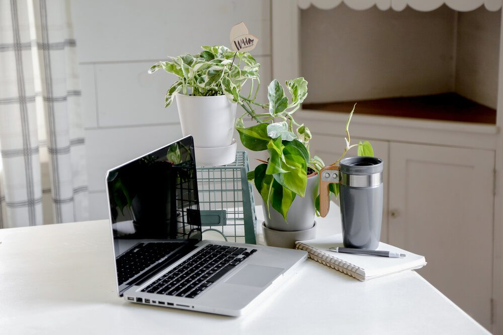 The Benefits of Indoor Plants