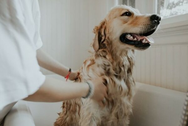 Finding the right pet insurance plan.
