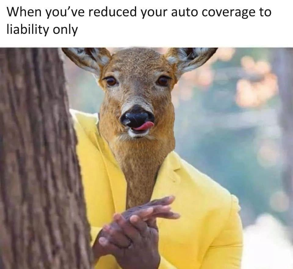 Dark Insurance - Silly Image of a Deer Taking Advantage of Driver With Minimal Auto Insurance Coverage