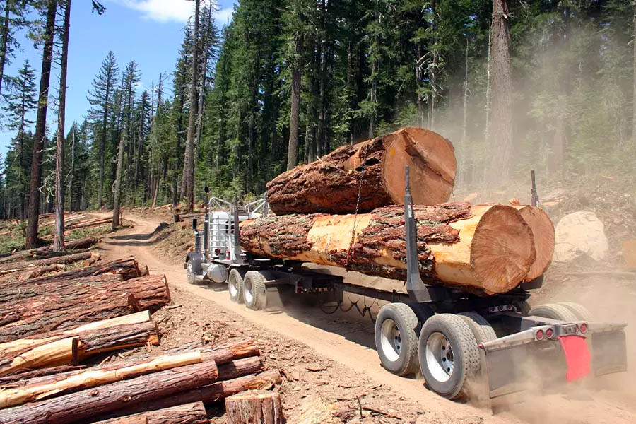Logging-Insurance-Large-Logging-Truck-Transporting-Large-Logs-with-Forest-in-the-Background