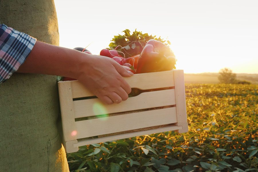 Specialized Business Insurance - View of Farmer Walking Through Field of Crops Carrying Wooden Crate with Fresh Vegetables at Sunset