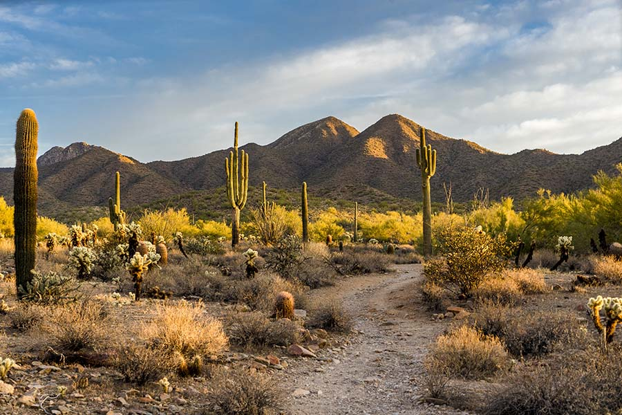 Arizona Cannabis Insurance - View of the Desert with Cacti and Sand Dunes at Sunset in Arizona