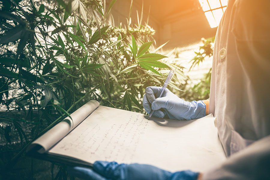 Cannabis Insurance FAQs - View of Scientists Examining and Taking Notes on the Health of Cannabis Plants in a Production Facility