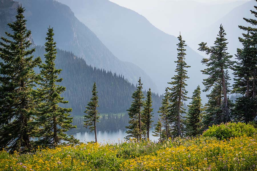 Montana Cannabis Insurance - View of the Mountains and Surrounding Forest in Glacier National Park in Montana