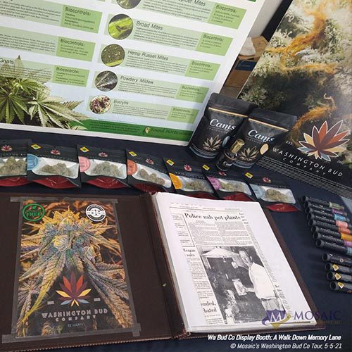Blog - Display Table of History and Types of Cannabis at WA Bud Co