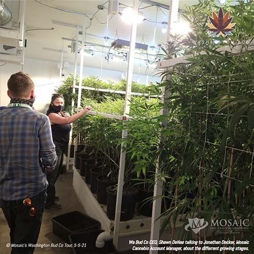 Blog - Explaining the Growing Stages with Shawn and Jonathan on the WA Bud Co Tour in 2021