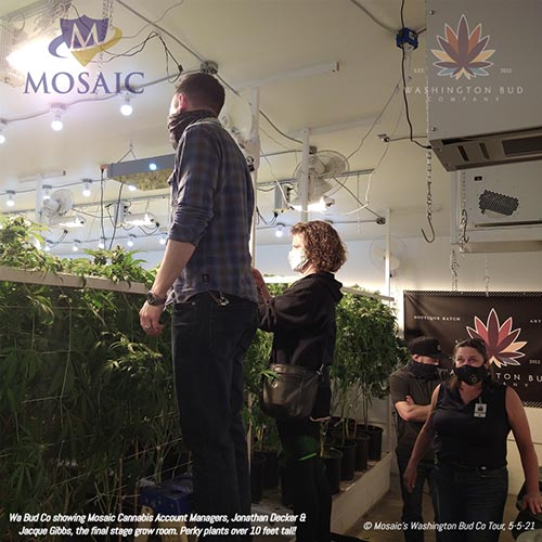 Blog - Jonathan and Jacque Staring at Cannabis Plants at the WA Bud Co Tour in 2021