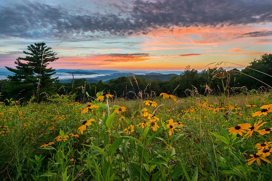 Virginia Insurance - a Field of Black-Eyed Susan Flowers, Green Grass, and Trees, With the Blue Ridge Mountains in the Distance and a Sunset Overhead
