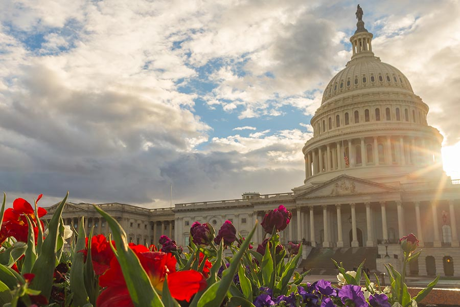 Washington, DC Insurance - the Capital Building in Washington DC, Sun Peaking Out From Behind the Dome, Red Flowers in the Foreground
