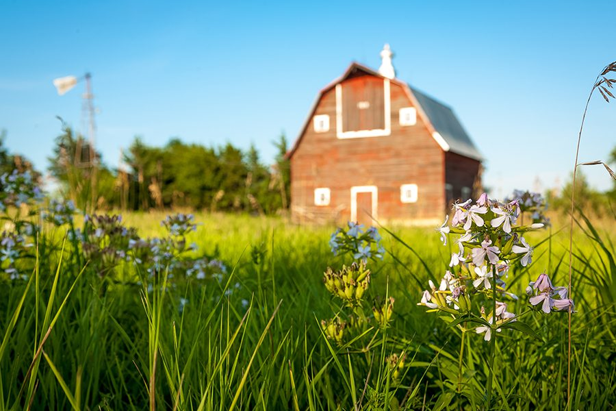 Butler, MO - A Red Barn Blurred in the Background with Green Grass on a Summer Day