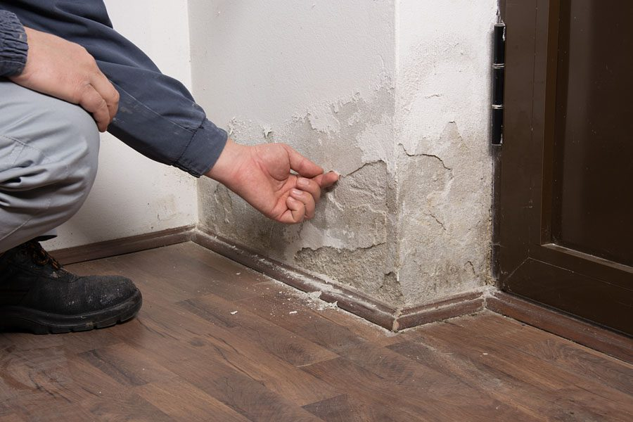 Environmental Insurance - Mold Escaping Through the Side of the Wall in Building