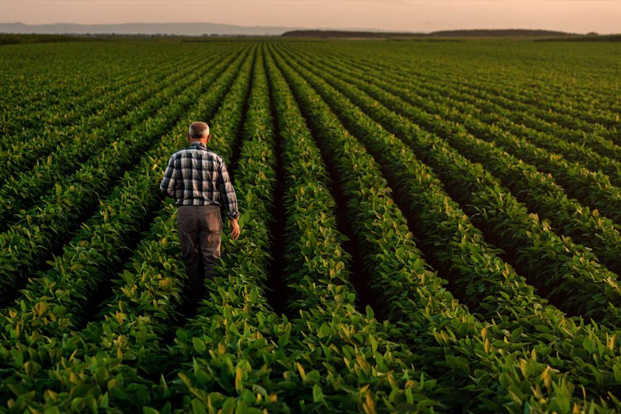 Crop Insurance - Senior Citizen Looking Out to His Farm and Crops in Early Fall