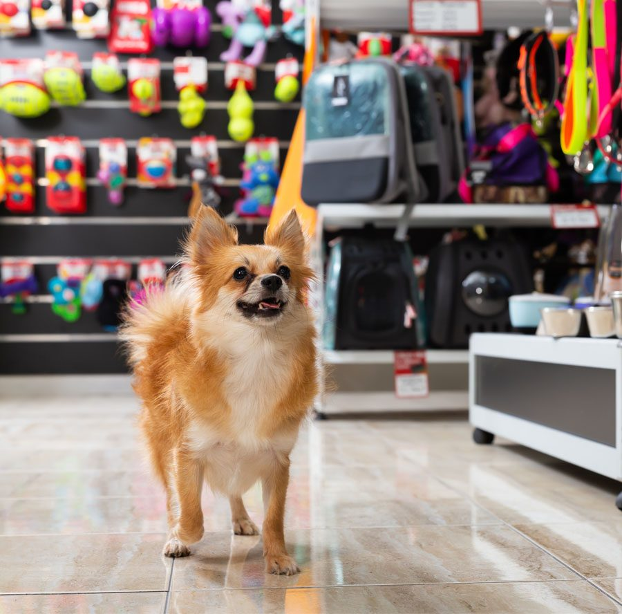 About Our Agency - View of Excited Dog Walking in a Pet Store