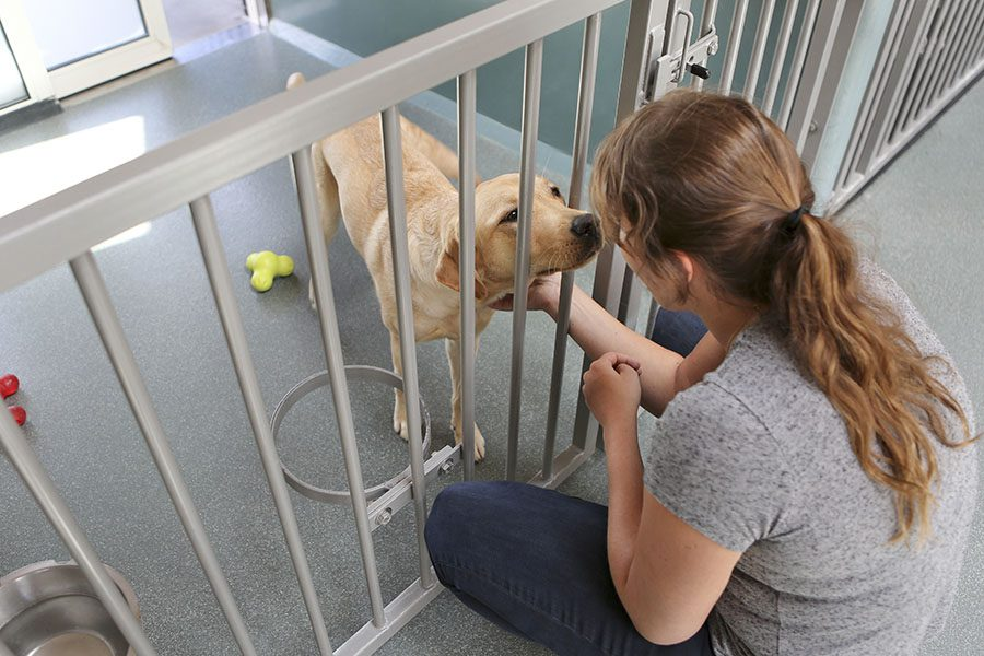 Kennel Insurance - Woman Petting Dog Standing in the Kennel