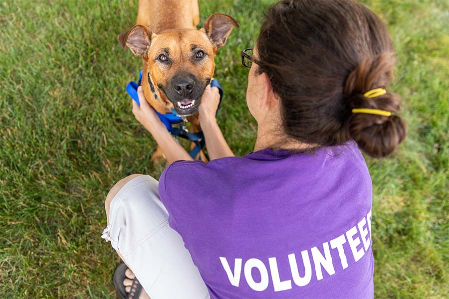 Non-Profit Insurance - Animal Shelter Volunteer Playing with a Happy Dog Outside in the Grass