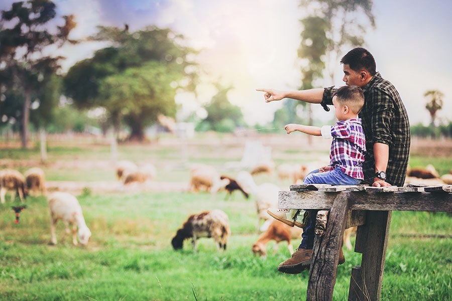 Insurance Quote - Father and Son Sitting on a Wooden Bench on a Farm Looking at the Surrounding Sheep Grazing on the Green Grass