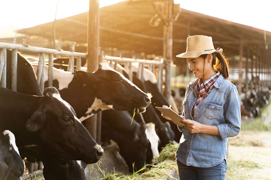 Specialized Business Insurance - Portrait of Smiling Dairy Farmer Watching Her Cows Eating Hay While Holding a Tablet