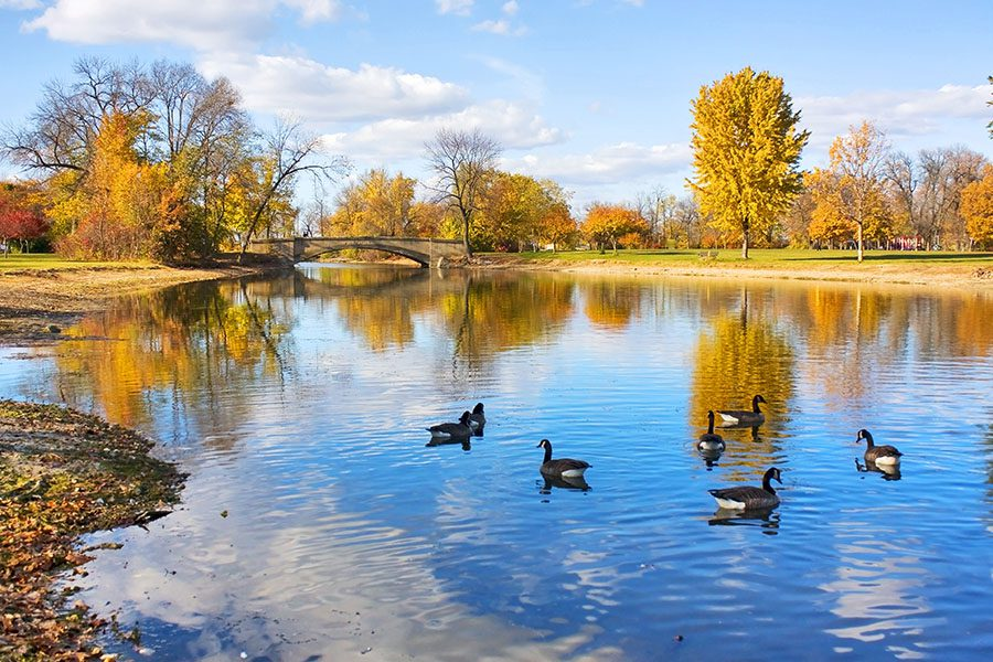 About Our Agency - Autumn Landscape with a Group of Canadian Geese on a Pond in Wisconsin